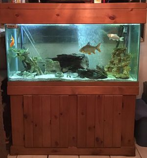 Aquarium for Sale in Saint Petersburg, FL
