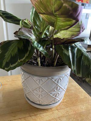 Allen & Roth Ceramic Plant Pot for Sale in Visalia, CA