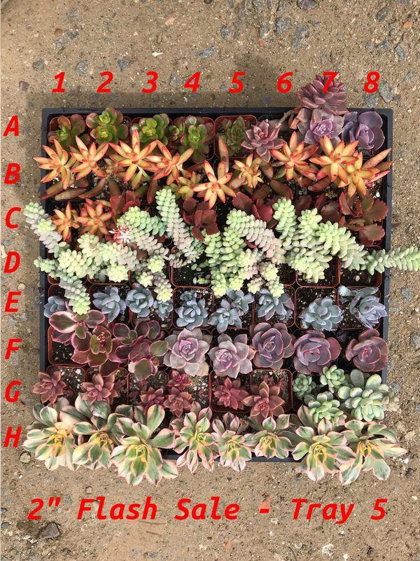 "Succulents 2""$2"