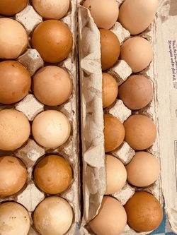 Farm Fresh Eggs for Sale in Jonesboro,  GA