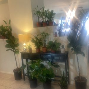 Indoor House in Plant Sale 1/26 Higley And Elliot for Sale in Gilbert, AZ