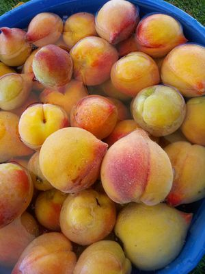 Peaches for Sale in Baldwin Park, CA