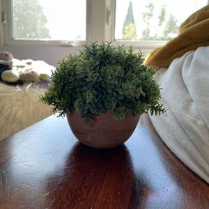 little fake bush plant for Sale in Laguna Beach, CA