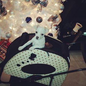 Folding Stroller 5 in 1 Pet Carrier for Sale in Fort Lauderdale, FL