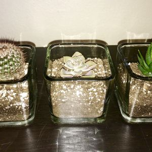 Cacti / Succulents for Sale in Los Angeles, CA