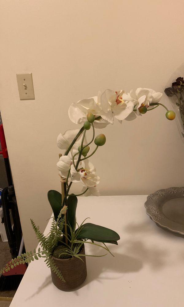 Home Decor Orchid Plant