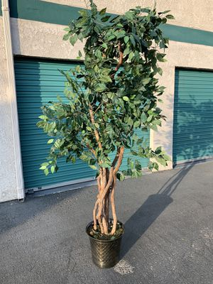 Fake indoor ficus plant tree for Sale in Buena Park, CA