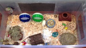 Hamster cage for Sale in Long Beach, CA