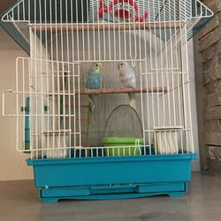 Tamed Parekeets with cage Food And Toys for Sale in Vancouver,  WA