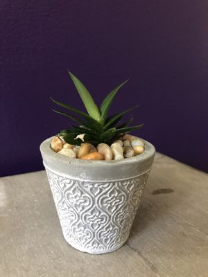 "succulent plant with 3"" pot for Sale in Queens, NY"