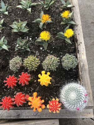 Cactus y succulents Diferentes precios for Sale in Stockton, CA