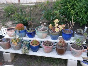 Cacti and succulents in beautiful ceramic pottery. Select large grouping or single plants. for Sale in Encinitas, CA