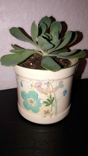 Pot with succulent for Sale in Dinuba, CA