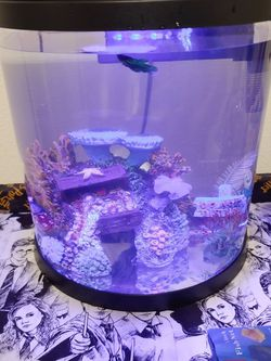2 3.5 Gallon Fish Tanks for Sale in Dinuba,  CA