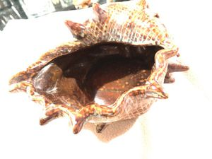 Seashell Holder c9 !! for Sale in Colorado Springs, CO