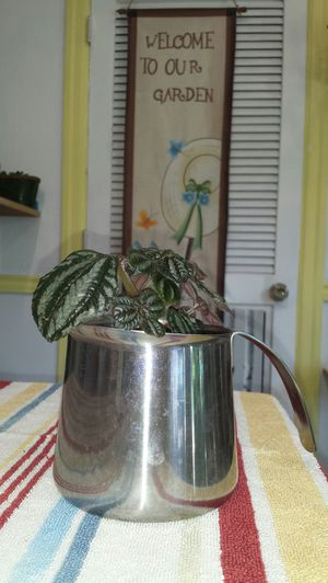 Live plant in excellent condition for Sale in Tacoma, WA