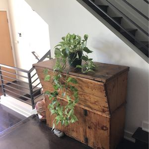 Ivy Plant And Pot for Sale in Marina del Rey, CA