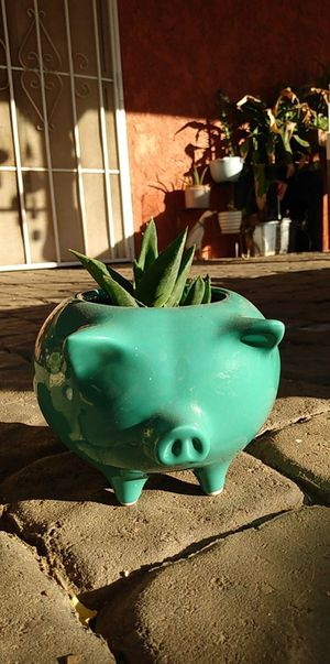 Succulent Pig planter for Sale in Fontana, CA