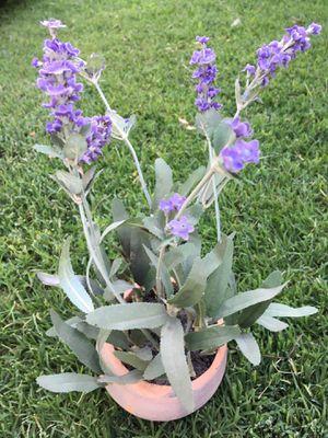 Fake plant. Half ft. for Sale in Fresno, CA
