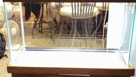 29 Gallon fish Tank An Stand for Sale in Auburn,  WA