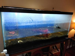 75 Gallon Aquarium, Light & Canister Filters for Sale in Tampa, FL