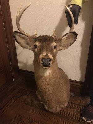 Deer Head for Sale in Oakland, CA