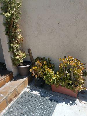 Assorted Plants for Sale in La Mirada, CA