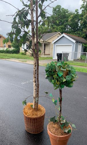Two beautiful plants #fake ...one TALL & one short !!!! for Sale in Chalmette, LA