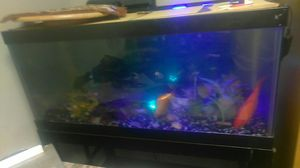 Fish tank w/fish for Sale in Alameda, CA