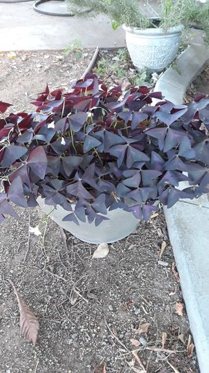 Plant for Sale in Sacramento, CA
