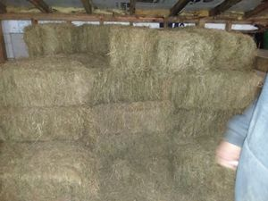3rd cutting orchard grass for Sale in Mount Solon, VA