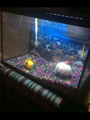 10 gallon fish tank for Sale in Richmond, VA