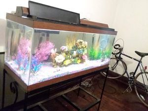 30 gallon fish Tank for Sale in St. Louis, MO