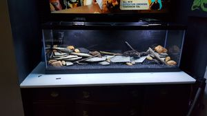 Fish tank with everything for Sale in Glen Burnie, MD