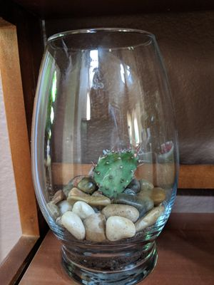 Succulent/cacti arrangement for Sale in Las Vegas, NV