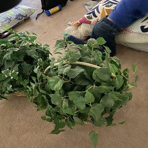 Fake Plants (3) for Sale in Boulder City, NV