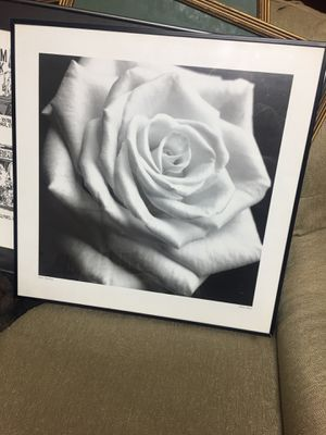 Picture of a white rose for Sale in Alexandria, VA