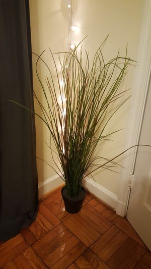 Artificial plant for Sale in Washington, DC