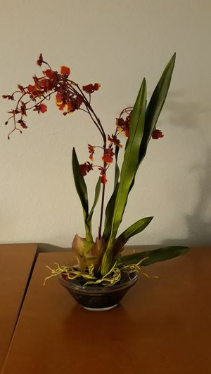 Fake plant for Sale in Gilbert, AZ