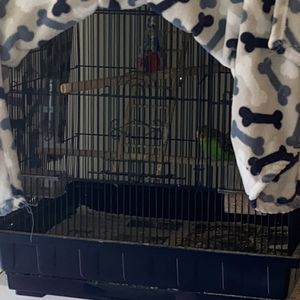 Bird cage(must go!) for Sale in Kissimmee, FL