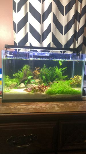 Fish tank with live plants for Sale in Sterling, VA