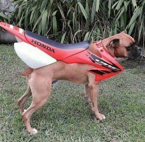 Honda Boxer 110 for Sale in Bakersfield, CA