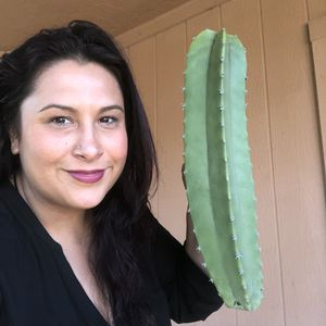 Cactus Plants Totem Pole Cutting Pachycereus Schottii Senita CLEARANCE for Sale in Chandler, AZ
