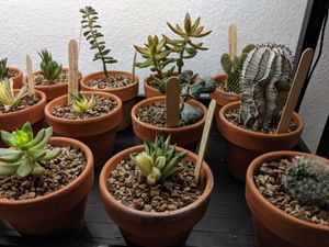Succulents and cactus collection. for Sale in Lucas, TX