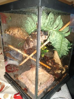 Thumbnail dart frog setup like 2.5 gallon tank for Sale in Hammond, IN