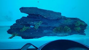 Decoration for fish tank. 18 inch L $12 for Sale in Chicago, IL