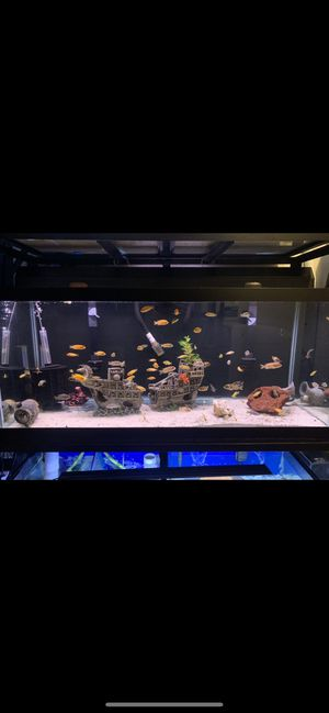 75 gallon fish tank plus fish and decorations for Sale in The Bronx, NY
