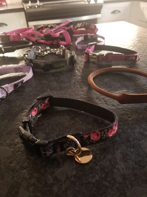 Dog collars! for Sale in Wilmington, NC