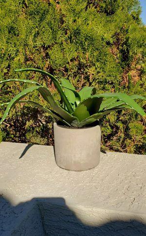 Artificial Aloe Plant for Sale in Goodyear, AZ