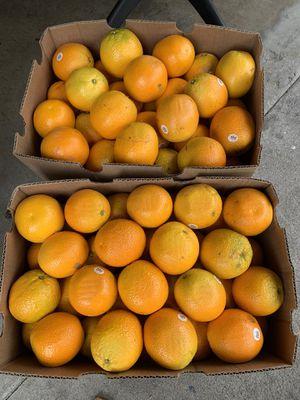 36 narajas grandes con buen jugo for Sale in Norwalk, CA